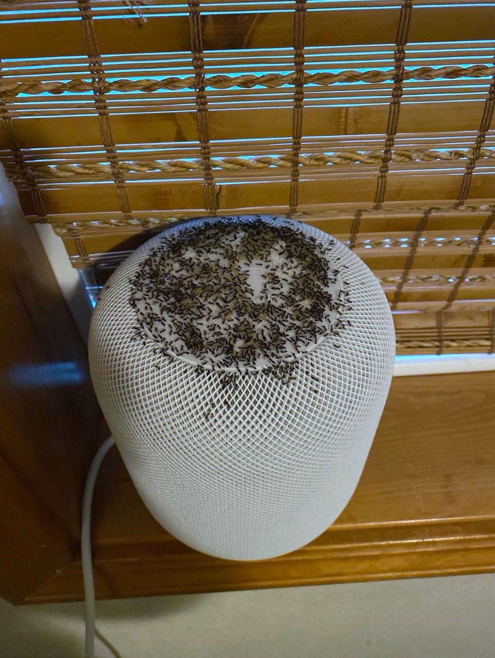 Le HomePod fait une bonne fourmilière