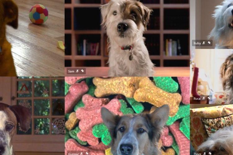 À Noël, les chiens rêvent de Microsoft