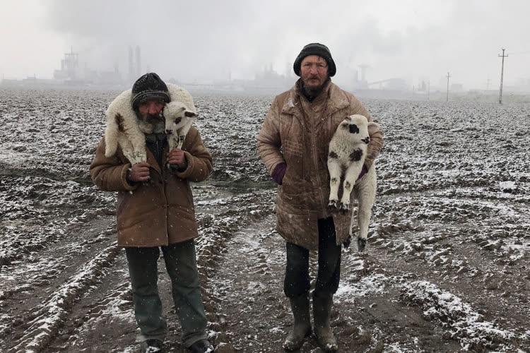 Des bergers transylvaniens pour remporter le «prix de la photographie iPhone»